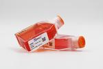 中国仓鼠肺细胞