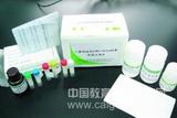 Casp-9人胱天蛋白酶9ELISA试剂盒