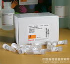 ABI LightShift化学发光EMSA试剂盒 20148