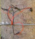 SF-L植物茎流测量仪