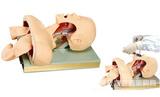 人体气管插管训练模型,气道管理模具