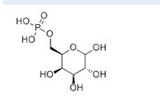 D-半乳糖-6-磷酸6665-00-5