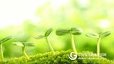 《植物生長與環境》課程資源包