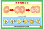 生物体结构层次