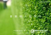 墙面装饰草坪