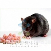 D12492高脂飼料(OpenSource Diets) Research Diets高脂老鼠飼料