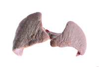 鱷魚肝塑化標本