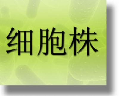 人宫颈癌细胞