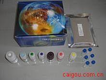 人XC趋化因子受体1(XCR1)ELISA试剂盒