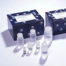 小鼠组胺(HIS)ELISA试剂盒