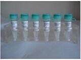 进口标准品CAS号:32510-61-5标准品头孢唑啉杂质D