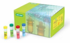 人α平滑肌肌动蛋白(α-SMA)ELISA试剂盒
