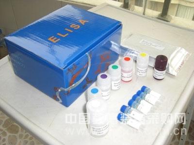 人α-辅肌动蛋白3(ACTN-3)ELISA试剂盒