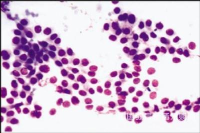 婆罗门牛皮肤成纤维样细胞,BOS-3