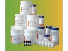 LB液体培养基