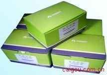 Endo-Free? Plasmid Giga Kit