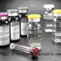 猫促卵泡激素(FSH)ELISA试剂盒