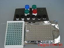 小鼠Elisa-瘦素试剂盒,(LEP)试剂盒