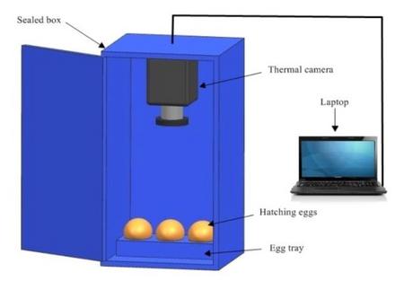 WIC640红外热成像仪(动物科学)