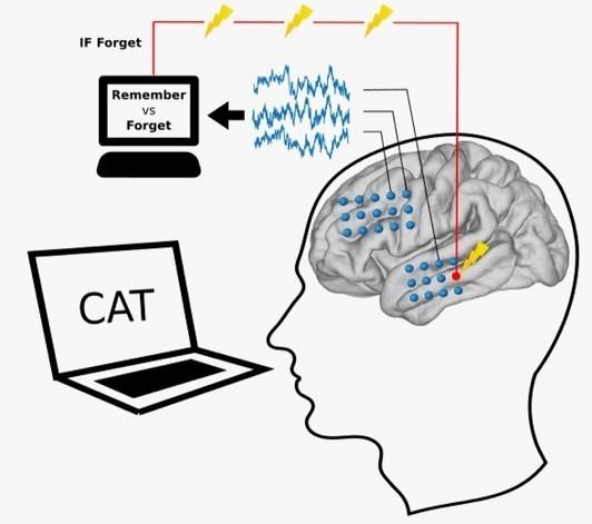 宾夕法尼亚大学发现 AI 可激发大脑潜能