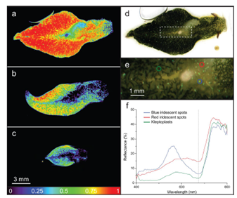 高光谱成像技术及其应用(附:IR近红外成像技术及其应用)