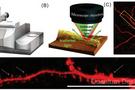 科學家借助全新非接觸式亞微米紅外光譜,首次成功直觀揭示神經元中淀粉樣蛋白聚集機理