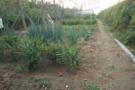 崂山区第二实验小学创STEAM农业科学基地