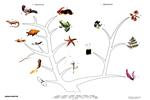 動植物進化樹教學掛圖