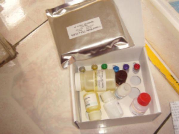 科研人可溶性白细胞分化抗原30配体ELISA试剂盒