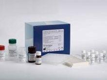 大鼠载脂蛋白H检测复孔(Apo-H)ELISA试剂盒最便宜价