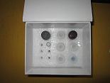 待测大鼠糖皮质激素受体α(GR-α)ELISA试剂盒价格