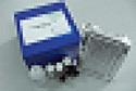 代测鸡白介素9(IL-9)ELISA试剂盒价格