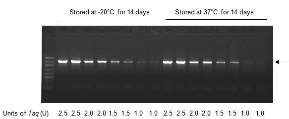 High-Stability PCR Kit